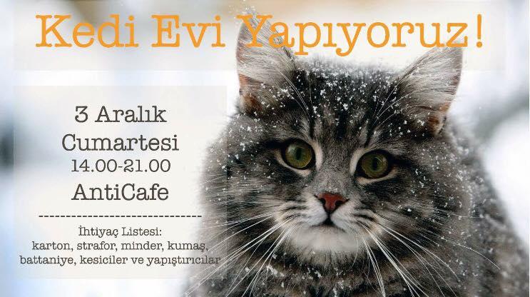 Kedi Evi Yapımı, 3 Aralık, Anti Cafe