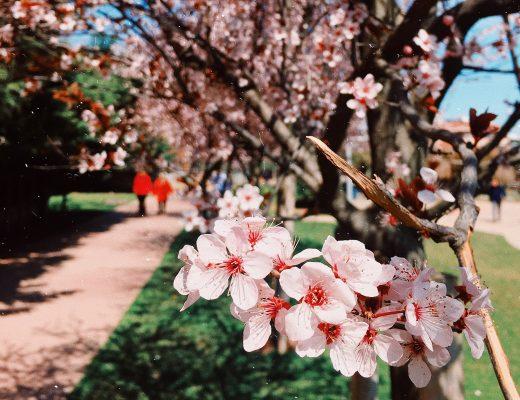 Etkinlik Rehberi: 8-14 Nisan